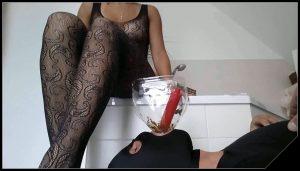 Lady Milena – Wichs Befehl Fuer Meine Toilette